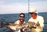 Shallow Water Grouper