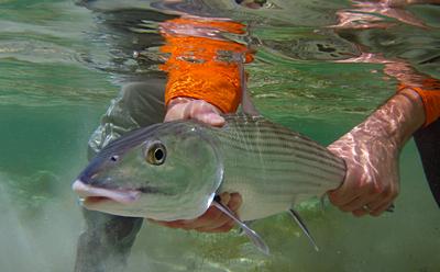 Bair's Lodge Bahamas, Bair's Lodge Bahamas Bonefishing, South Andros Island