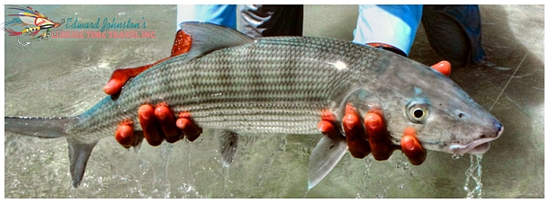 Big Bonefish at Mars Bay Bonefish Lodge