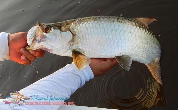 Tarpon Cay Lodge : Tarpon fishing northern Mexico's Yucatan peninsula, Tarpon Angling
