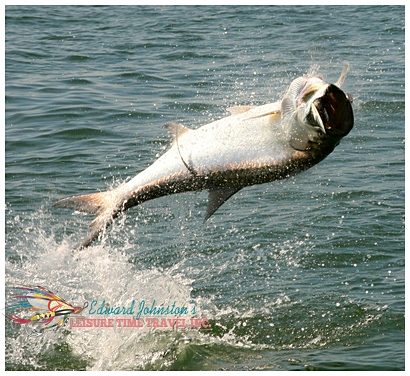 Flats Fishing for Homosassa Tarpon