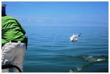 Tarpon Fishing Homosassa