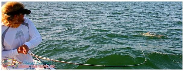 Giant Tarpon Fishing Homosassa River