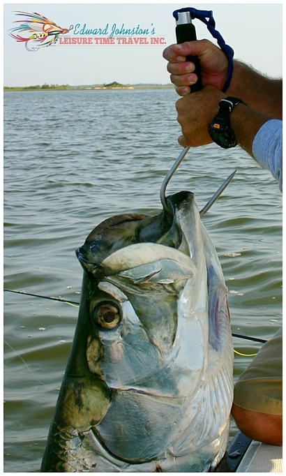Trapon Fishing the flats of Homosassa, Homosassa river