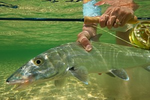 Bairs Lodge Andros Island Bahamas, World Class Bonefishing