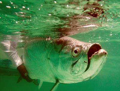 El Pescador Lodge Ambergris Caya Belize - World class flats fishing for tarpon